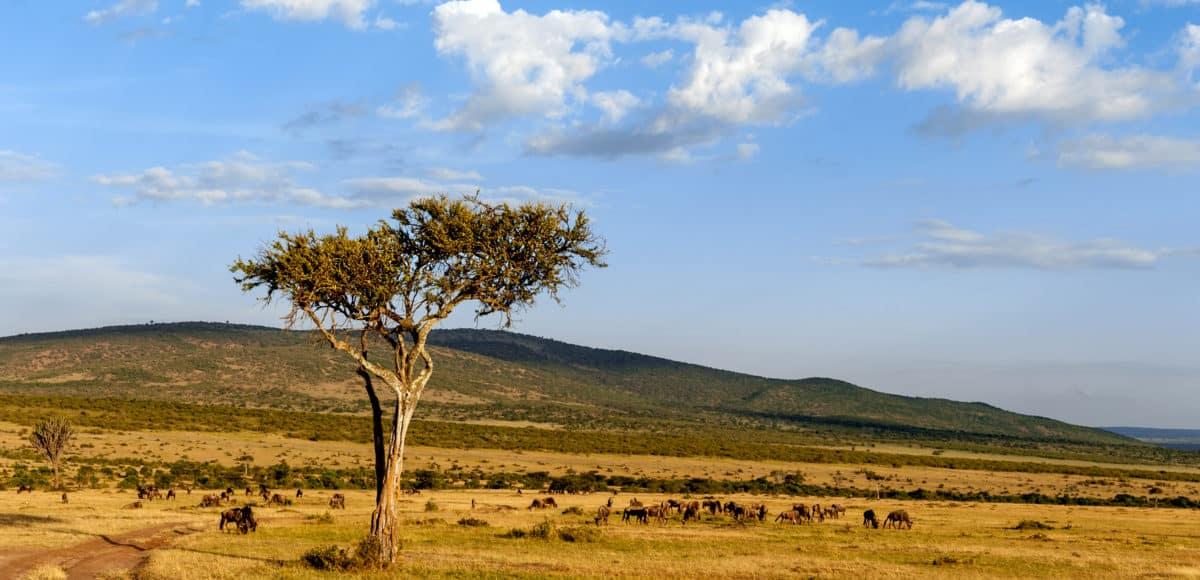 nobody tree in Africa